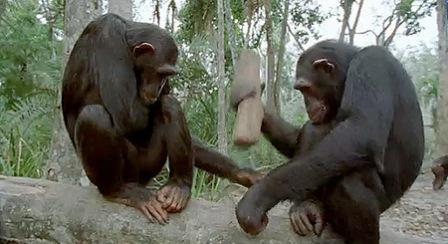 BBC Online Zoo