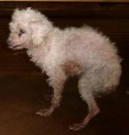 Dog in ShanChong Shelter