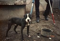 dogfighting.jpg