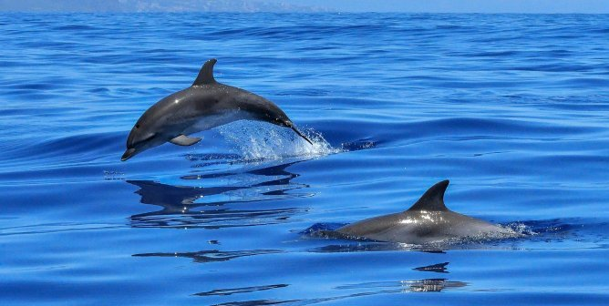 Dolphin Obituaries: What It's Really Like to Live and Die at SeaWorld