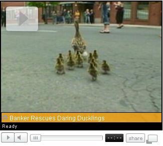 Ducks Jump