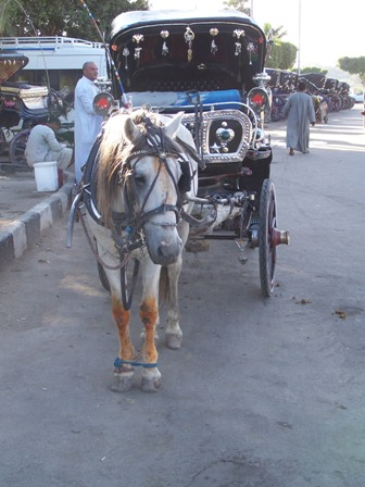 Horse drawn carriages in Egypt