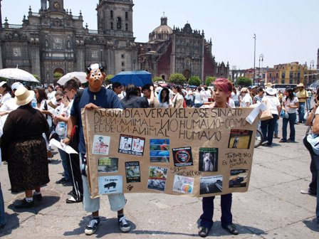 Speaking Up for Animals South of the Border