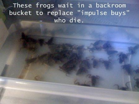 Brookstone Frogs