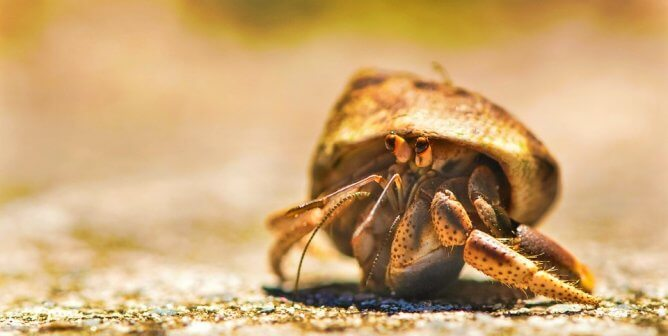 Urge South Carolina Beach Store to Ditch Hermit Crab Sales!
