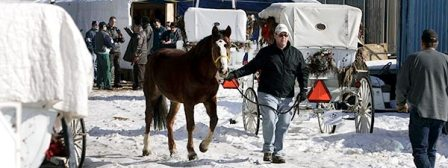 Chicago Horses