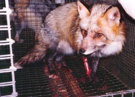Photoshopped Fox