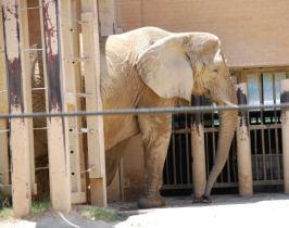 jenny_the_elephant1.JPG