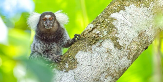 Seahorses, Marmosets, and Other Dads Go to Great Lengths to Be Great Fathers