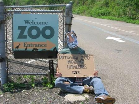 Zoo demo
