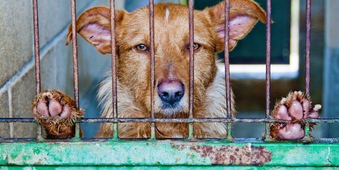 URGENT: Urge Officials to Stop Gassing Animals at Green River Animal Shelter