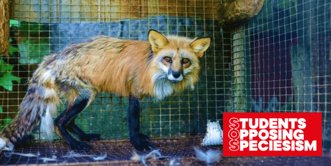 WATCH: Students Make Some Noise for Animals at Stores That Sell Fur