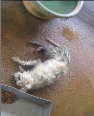 Dog in Sanchong shelter