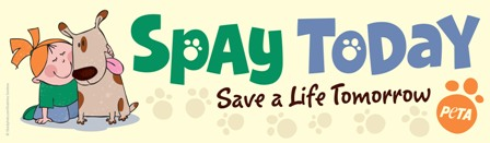 spay today