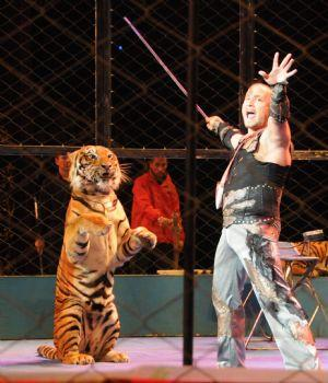 Tiger Trainer