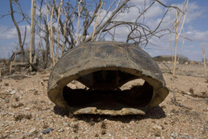tortoise-vs-tank-military-w.jpg