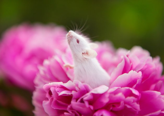 Victory! The European Parliament Votes YES to a Future Without Animal Experiments