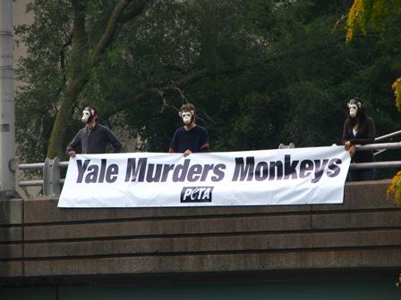 Yale Demo