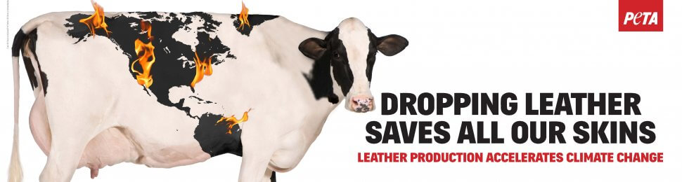 Dropping Leather Saves All Our Skins