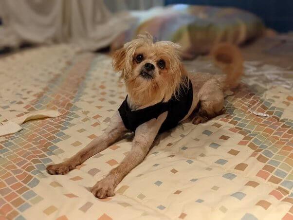Bon Jovi, a dog rescued by PETA