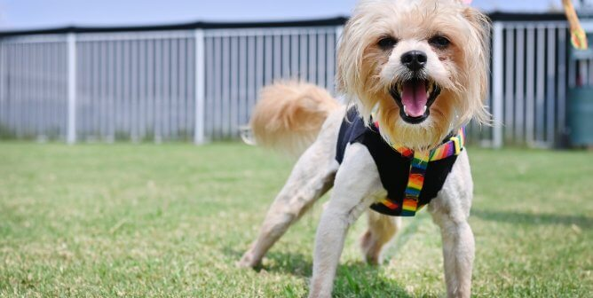 Dog Rescued by PETA Is a Real Rock Star