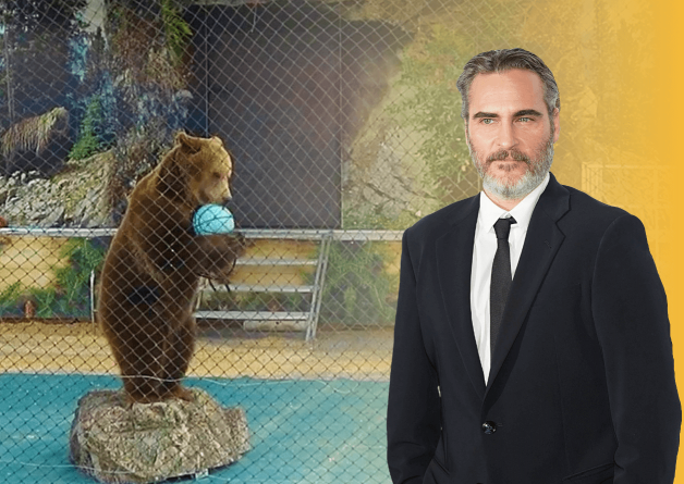 Joaquin Phoenix, a True 'Brother Bear,' Sticks Up for Bears in Traveling Show