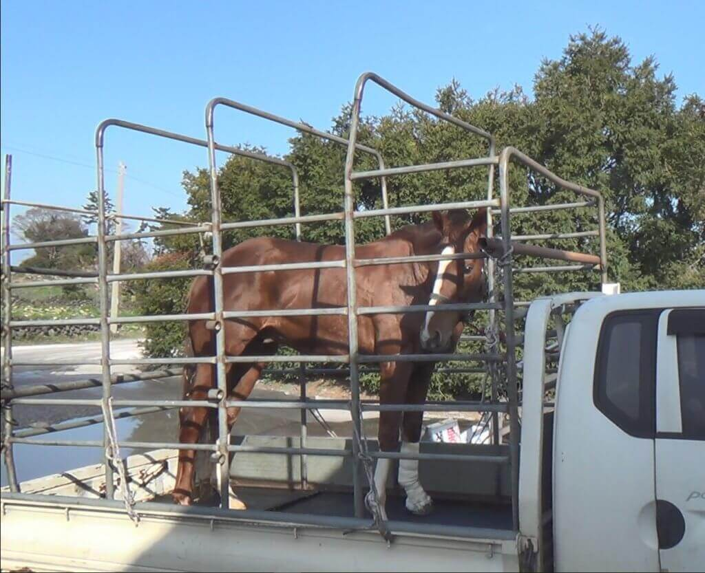 KRA scrubs records of horserace slaughter in South Korea