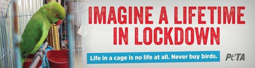 Imagine A Lifetime In Lockdown