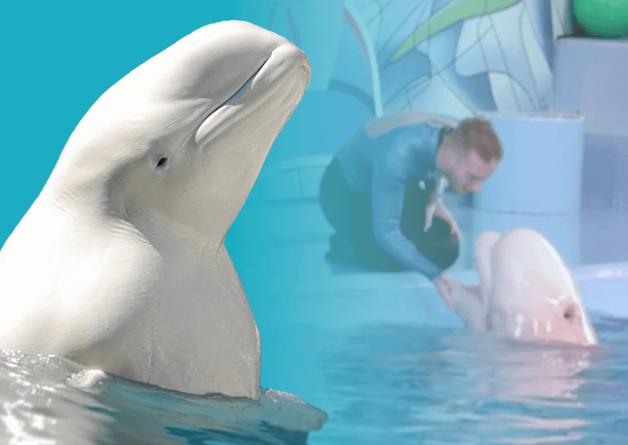 PETA: Birth of Beluga Whale at SeaWorld San Antonio Is Nothing to Celebrate