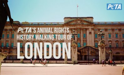 Explore London Like a Local—With an Animal Rights Twist