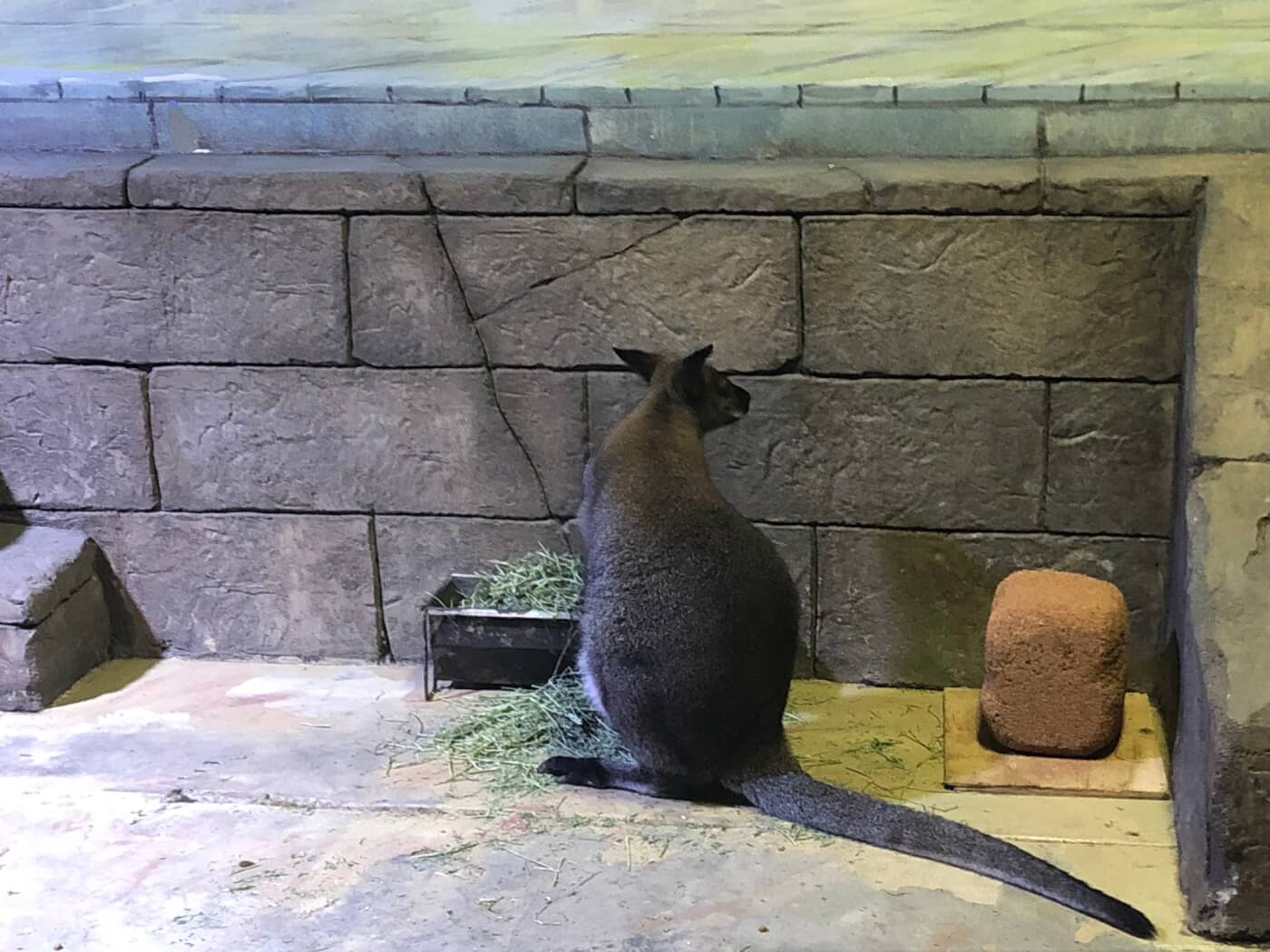 SeaQuest Littleton Aquarium Wallaby Ben Drowns
