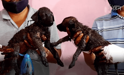 VIDEO: Two Puppies' Sticky Situation Calls For Help From the Best—Animal Rahat!