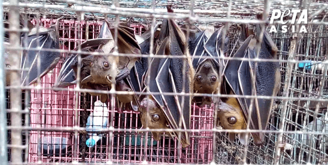 Killer Conditions: New PETA Asia Live-Animal Market Video Draws Global Attention