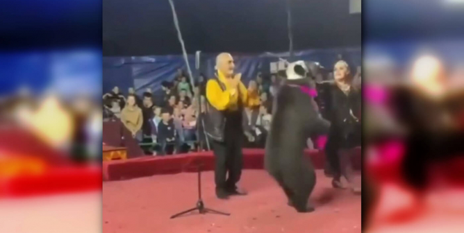 These Viral, Graphic Incidents Prove It: Animals Don't Belong in Circuses