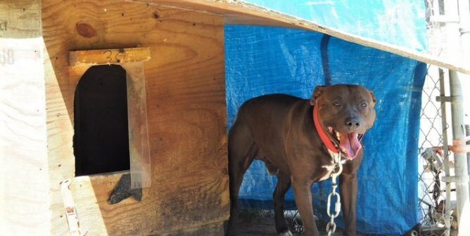 6 Steps to Help Chained Dogs in All Weather