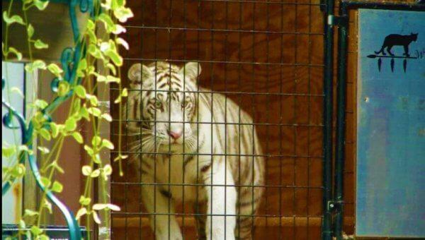 Urge Wild Woods Animal Park to Send Animals to Reputable Facilities