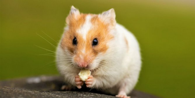 Major Supplier to Taiwan's 7-Eleven Stores Bans Animal Tests After PETA Push