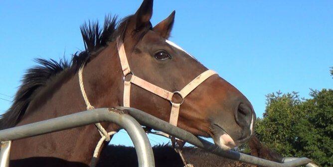PETA Slams South Korean Officials for Erasure of Racehorse Slaughter Records