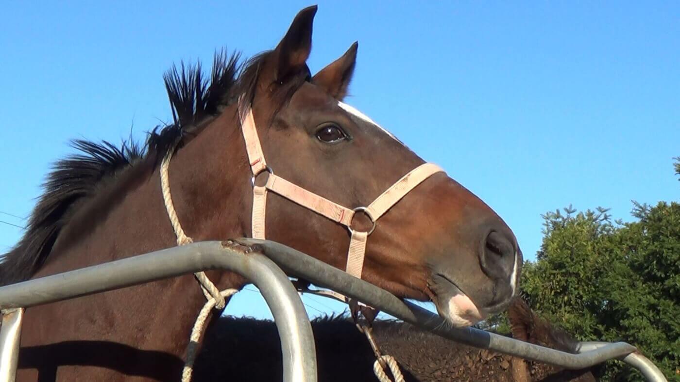 peta demands kra take action after south korean horse slaughter records erased