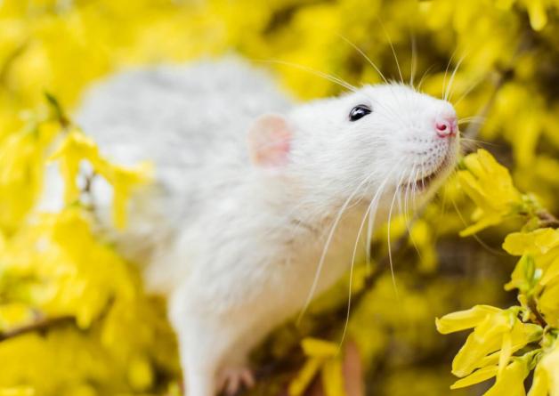 Taiwan's Third-Largest Health Food Company Bans Animal Tests After PETA Push