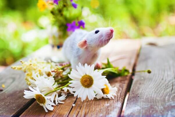 Mouse with flowers on table