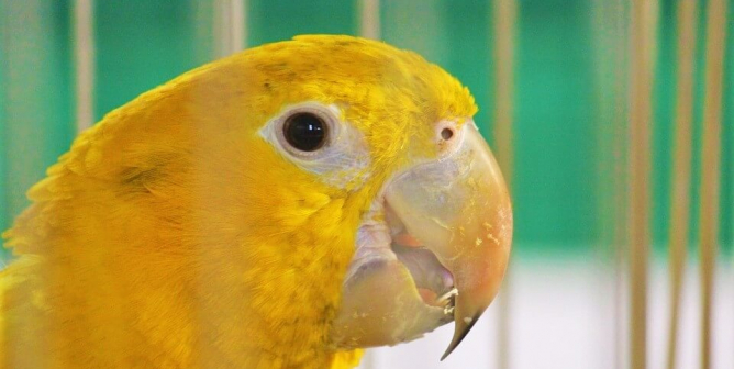 10 Reasons Never to Buy a Bird From Petco (or Anywhere Else)