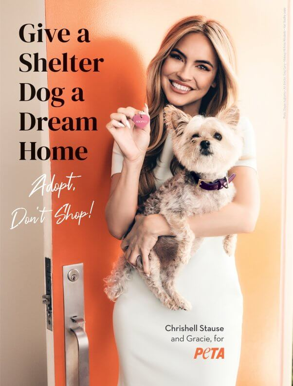 Give a shelter dog a dream home Chrishell Stause