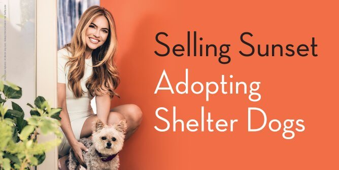 Chrishell Stause of 'Selling Sunset': Buy Houses, Not Dogs