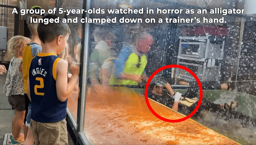 A group of 5-year-olds watched in horror as an alligator lunged and clamped down on a trainer's hand.