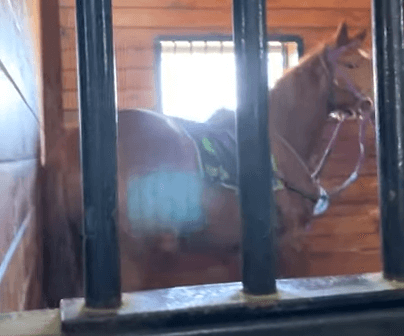 Take Action: Trainer Beats Racehorse With a Plastic Pitchfork