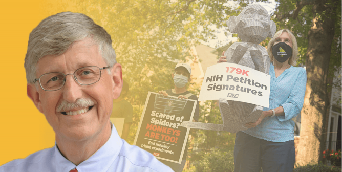 PETA Told You So, and Now There's More Proof: Francis Collins Must Go!