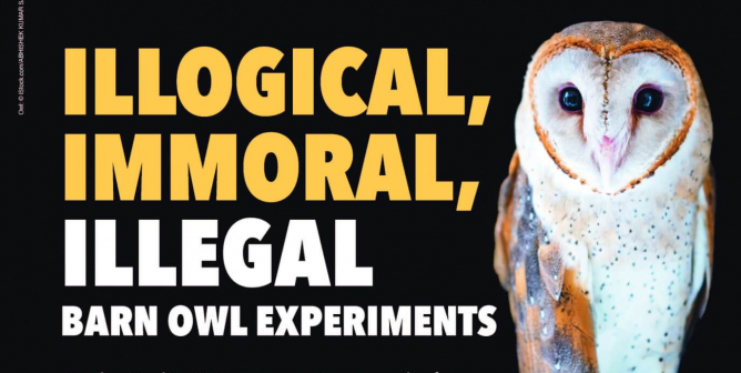 Illogical, Immoral, Illegal Barn Owl Experiments