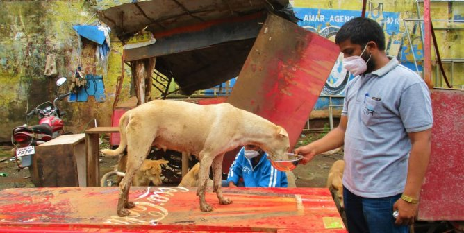 For Dogs Like Her, Help Animal Rahat Weather the Flood and Save Lives