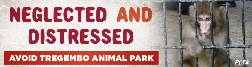 Neglected And Distressed. Avoid Tregembo Animal Park